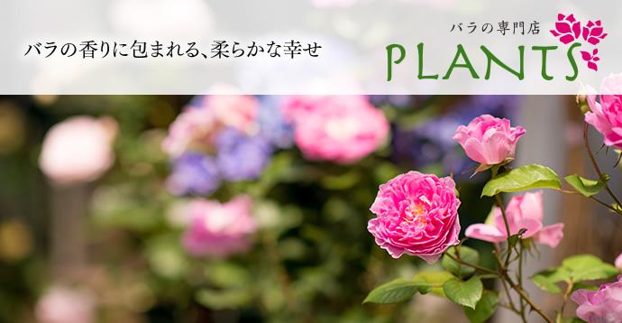 バラの専門店PLANTS