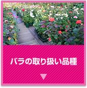 バラの取り扱い品種