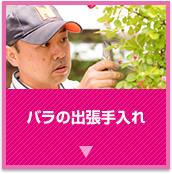 ローズメンテナンス・ローズレスキュー