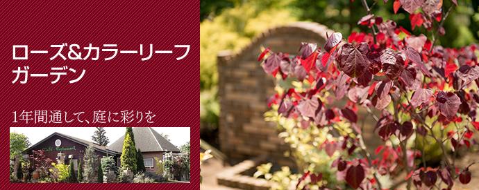 ローズ&カラーリーフガーデン、色彩が豊かなガーデンを、通年で楽しめます。