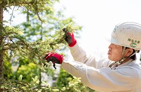 庭木の病害虫対策