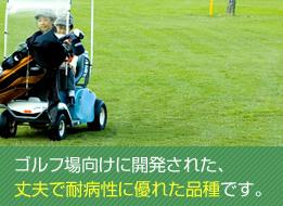 ゴルフ場向けに開発された、丈夫で耐病性に優れた品種です。