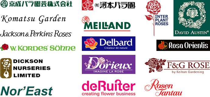 京成バラ園芸、河本バラ園、コマツガーデン、ロサオリエンティス、 デビッドオースチン(David Austin)、メイアン(Mailand)、デルバール(Delbard)、J&P、ディクソン(dicson)、コルデス(kordes)、タンタウ(tantau)、インタープランツ(Interplant Roses)、デルイター(deruiter)など