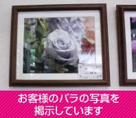 お客様のバラの写真を掲示しています